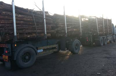 commercial timber from forestry in Cork