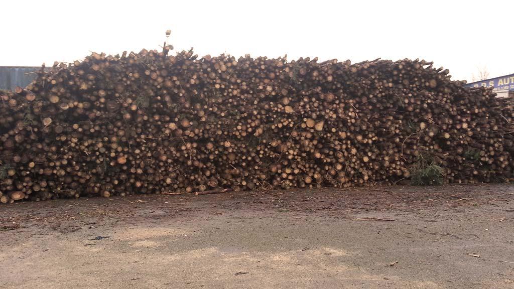 logs in Cork