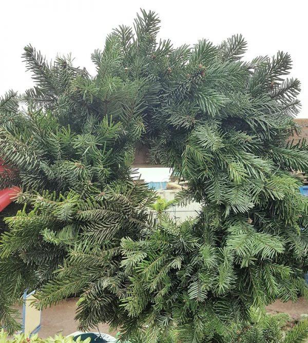 plain christmas wreaths